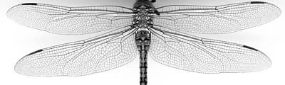 Dragon Fly Photograph - Dragon Wings by Tim Nichols