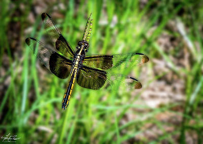 Photograph - Dragonfly 01 by Phil and Karen Rispin