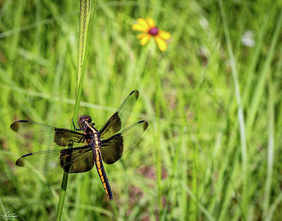 Photograph - Dragonfly 02 by Phil and Karen Rispin