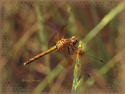 Photograph - Dragonfly 1 by Kae Cheatham