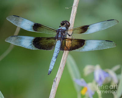 Photograph - Dragonfly 12 by Christy Garavetto