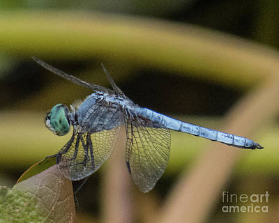 Photograph - Dragonfly 15 by Christy Garavetto