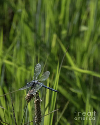 Photograph - Dragonfly 19 by Christy Garavetto