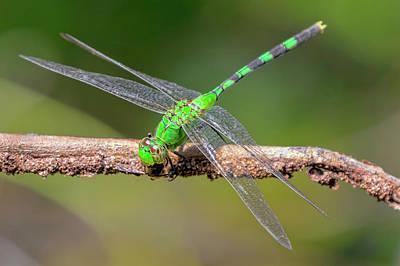 Photograph - Dragonfly 2 by Nadia Sanowar