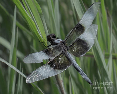 Photograph - Dragonfly 20  by Christy Garavetto