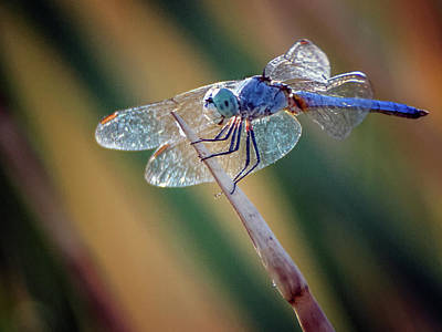 Photograph - Dragonfly 2653-081718-1cr by Tam Ryan