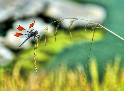 Photograph - Dragonfly 3 by Sam Davis Johnson