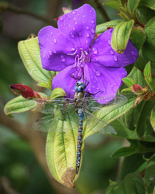 Photograph - Dragonfly And Flower by Keith Boone