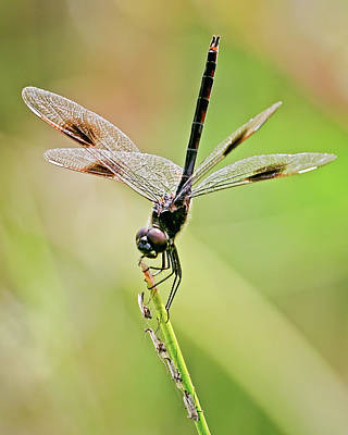 Photograph - Dragonfly And Friends by Dawn Currie