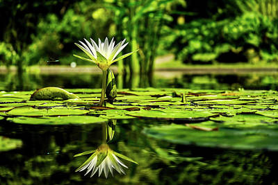 Photograph - Dragonfly And Water Lily by Pixabay