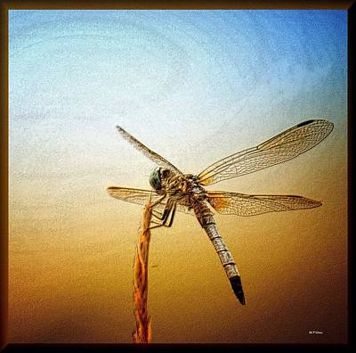 Photograph - Dragonfly Art 15-01 by Maria Urso