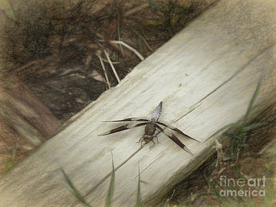 Dragonfly Wings Photograph - Dragonfly Art by Scott Cameron