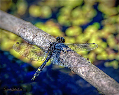 Photograph - Dragonfly At Bear Creek by LeeAnn McLaneGoetz McLaneGoetzStudioLLCcom