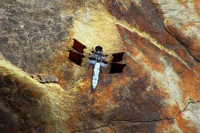 Photograph - Dragonfly At Mount Rainier by Karen Molenaar Terrell