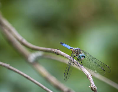 Photograph - Dragonfly At Rest by Andy Crawford
