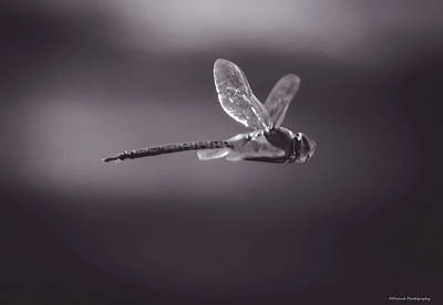 Photograph - Dragonfly Bw by Debra Forand