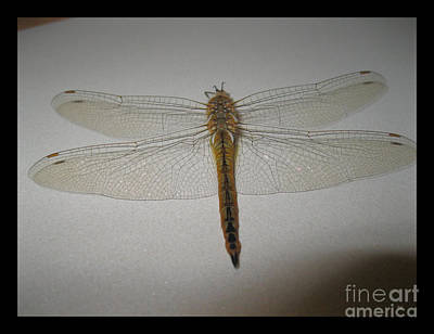 Painting - Dragonfly Collection. Image 27.4 by Oksana Semenchenko