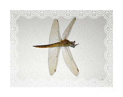 Painting - Dragonfly Collection. Image 5.2 by Oksana Semenchenko