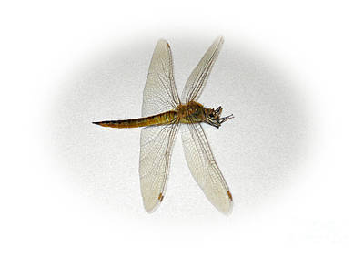Painting - Dragonfly Collection. Image 5.3 by Oksana Semenchenko