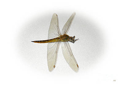 Painting - Dragonfly Collection. Image 5.3.1 by Oksana Semenchenko