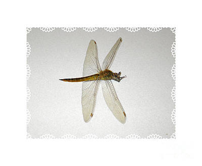 Painting - Dragonfly Collection. Image 5.5 by Oksana Semenchenko