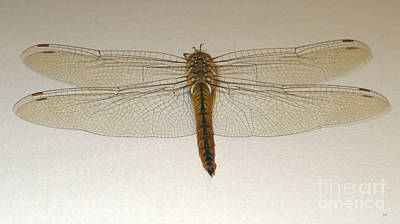 Painting - Dragonfly Collection. Image 6 by Oksana Semenchenko