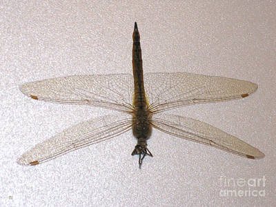 Painting - Dragonfly Collection. Image 8. Promotion by Oksana Semenchenko
