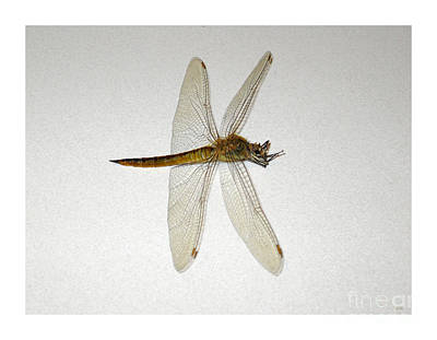 Painting - Dragonfly Collection. Image5.4 by Oksana Semenchenko