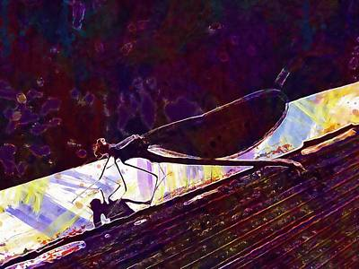 Dragonfly Demoiselle Insect Nature  Art Print