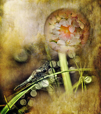 Dragonfly Photograph - Dragonfly Dreams by Susan Capuano