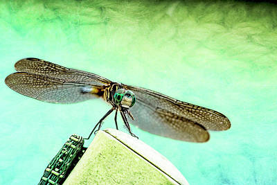 Naiad Photograph - Dragonfly Eating His Bug by Kay Brewer