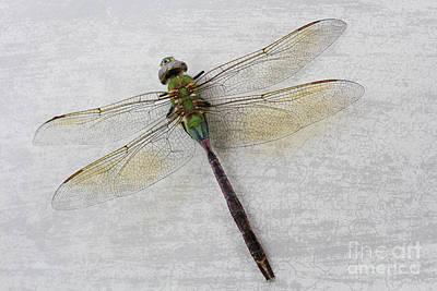 Dragonfly Art Print by Ella Kaye Dickey