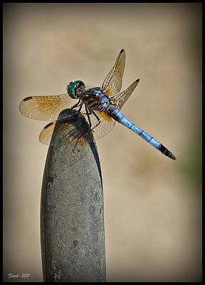 Dragonfly Art Print by Farol Tomson