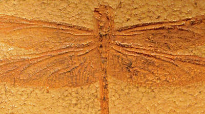 Texture Photograph - Dragonfly Fossil by Sandy Taylor