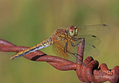 Wall Art - Photograph - Dragonfly by Gary Wing