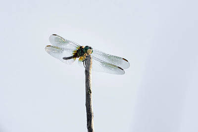 Photograph - Dragonfly Giving An Hello Down There by Debra Martz