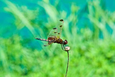 Travel - Dragonfly Hanging On by Douglas Barnett