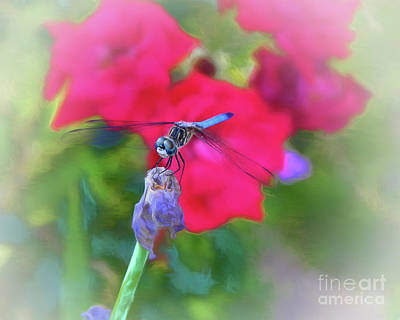 Photograph - Dragonfly II by Scott Cameron