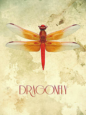 Digital Art - Dragonfly IIi by Binka Kirova