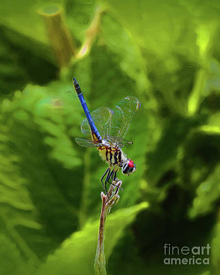Photograph - Dragonfly IIi by Scott Cameron