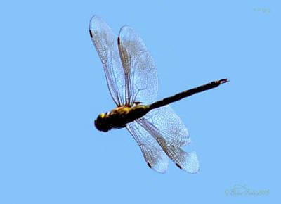 Dragonfly In Flight, Front Yard Art Print