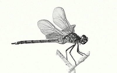 Photograph - Dragonfly In Monotone by T Guy Spencer