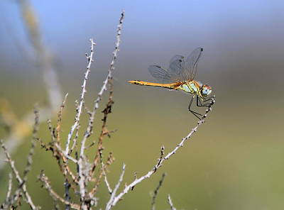 Photograph - Dragonfly In Nature by Elenarts - Elena Duvernay photo