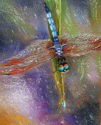 Pastel - Dragonfly In The Rain by Susan Jenkins
