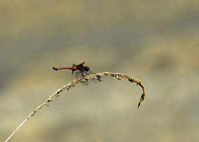 Photograph - Dragonfly by JAMART Photography