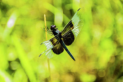 Photograph - Dragonfly by Jay Stockhaus