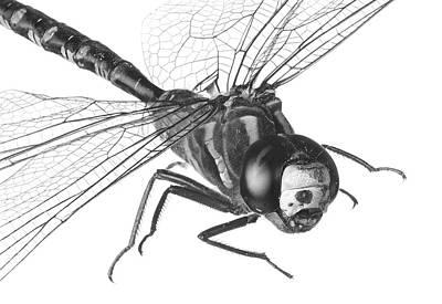 Dragonfly Art Print by Jim Hughes