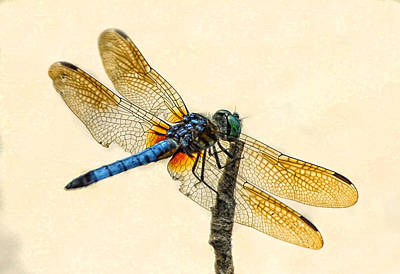 Dragonfly Art Print by Jim Moore