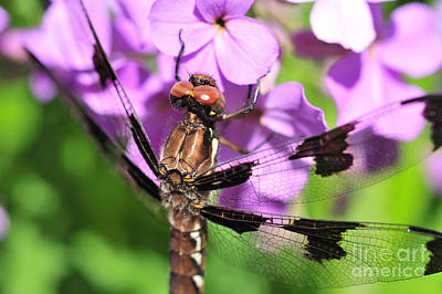 Dragonfly Art Print by Joe  Ng