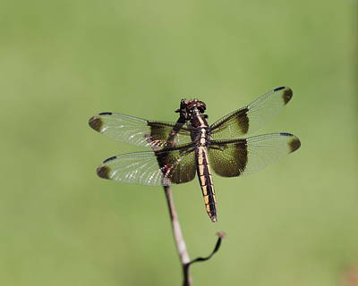 Photograph - Dragonfly by John Moyer